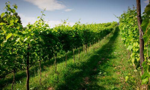 Winnica Nad Źródłem