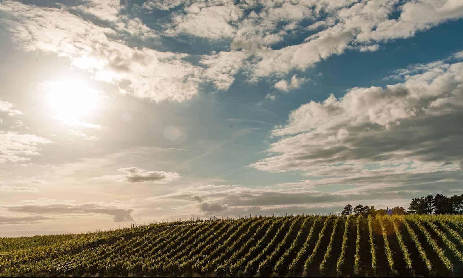 Winnice Kojder - Inspiracje do odwiedzania winnic