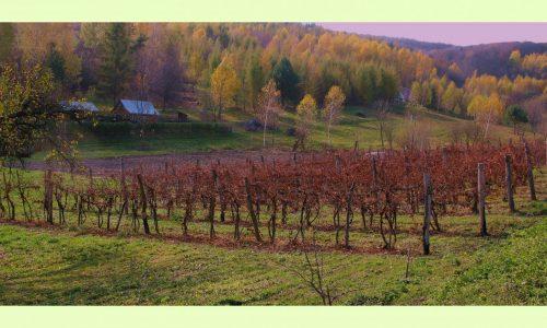 Winnica Węgrzyn