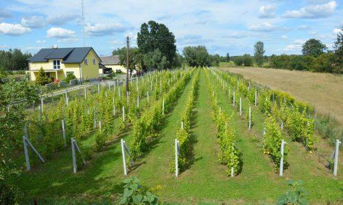 Winnica Cygów