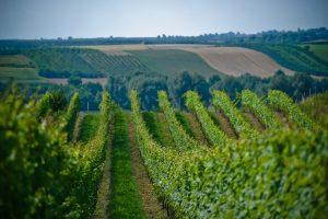 winnica płochockich