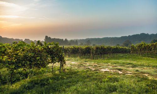 Winnica Srebrna Góra